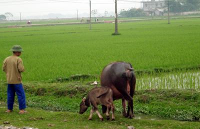 Vùng quê nghèo xứ nghệ, cha mẹ Kiện chỉ có mảnh đất