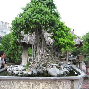 Tăng Thành - Yên Thành: Làm giàu từ cây cảnh
