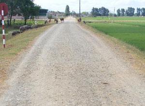 Tuyến đường tỉnh lộ 534 chạy qua xã đang xuống cấp do lu lụt cần sớm nâng cấp sửa chữa